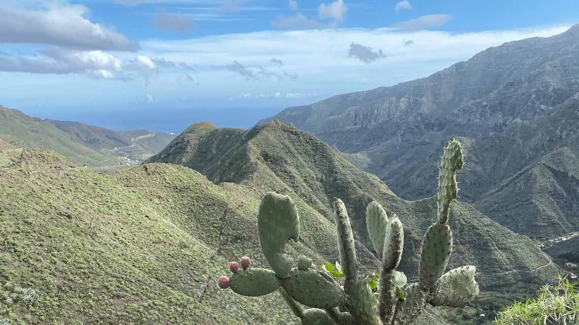 Les îles Canaries (fin)
